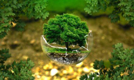 3 gode råd til en mere klimavenlig hverdag